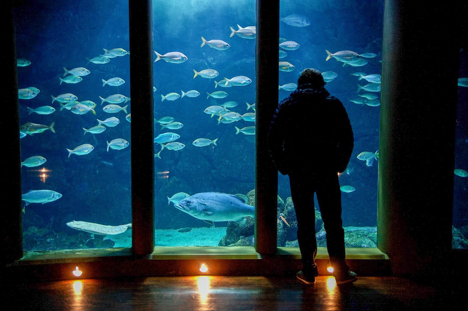 5 Things to do with your family in A Coruña - Aquarium Finisterrae