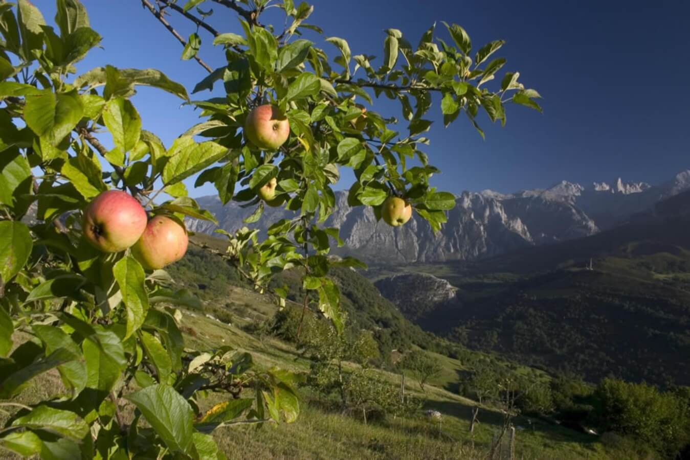 The best tours of northern Spain: where to visit - Asturias Tours