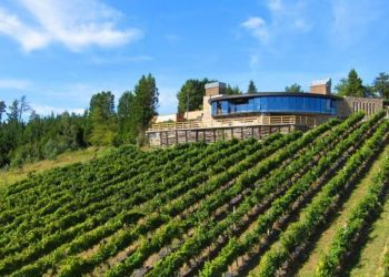 The Basque Coast and Txakoli Winery Tour