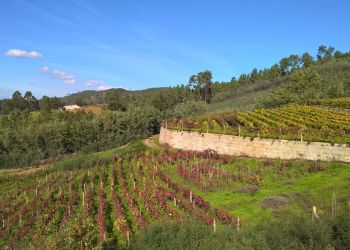 Camino del Vino Wine Trails of O Ribeiro Wine Country
