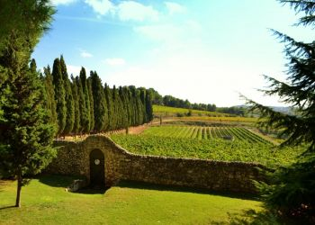 Penedes Exclusive Wine and Cava Tour from Barcelona