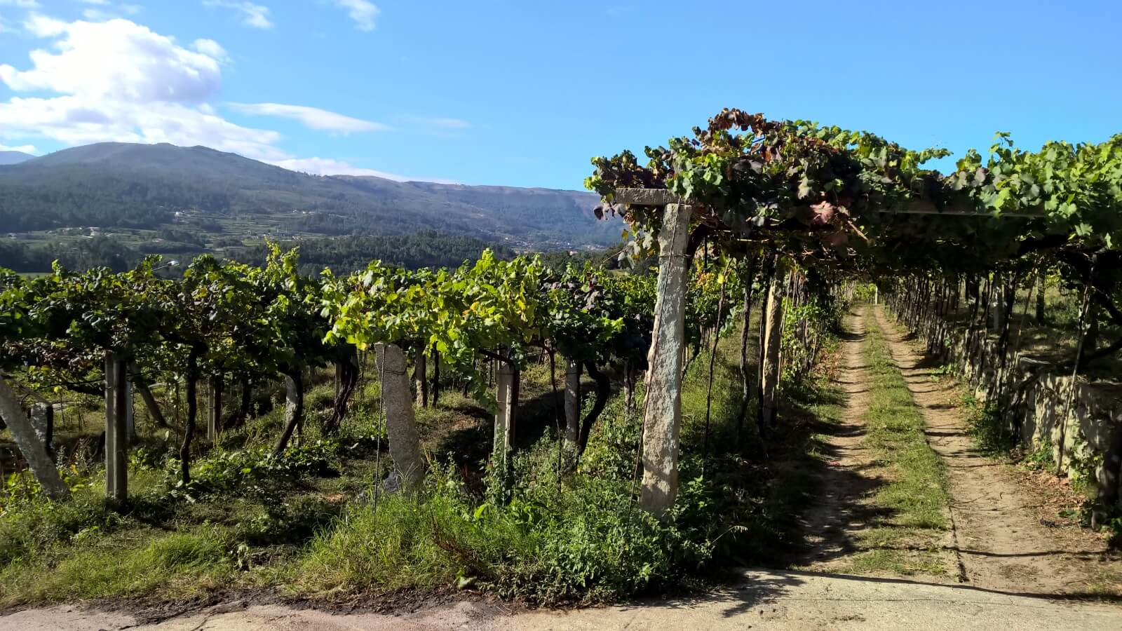 Spanish wine types: discover the best varieties