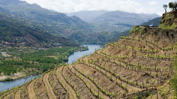 Stress-Free Day Trip to the Douro River Valley from Porto