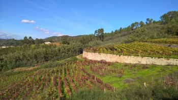 O Ribeiro Wine Country & Wine Trails