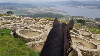 Camino de Santiago Portuguese Way: Horse Riding from Porto