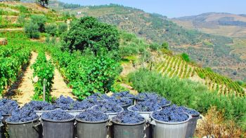 Excursion to Douro Valley Wine Region from Porto