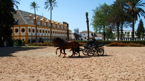 The Dancing Andalusian Horses of Jerez and Sherry Winery Visit from Sevilla