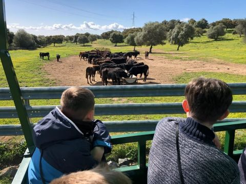 Visit to an Andalusian Bull and Horse Ranch with traditional lunch