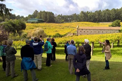Albarino Wine Tasting and Celtic Sites of the Salnes Valley Rias Baixas
