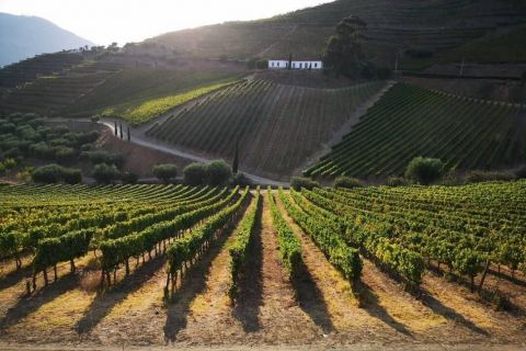 Douro Valley: Tasting Port Wines at selected Quinta Wine Farms