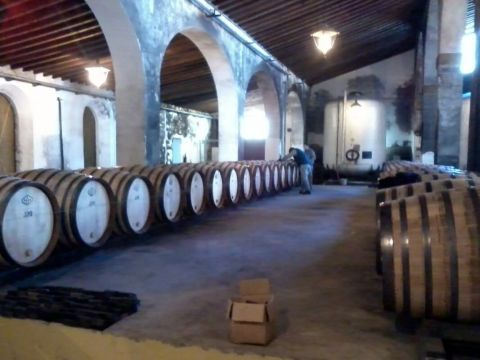 Sherry and Seafood in Sanlucar de Barrameda Wine Tour from Seville