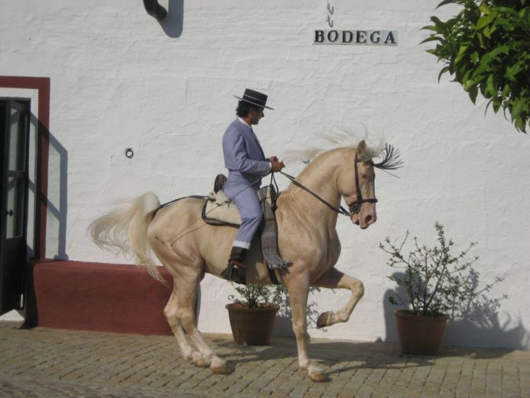 Jerez de la Frontera Sherry winery tour and The Dancing Andalucian Horse Show