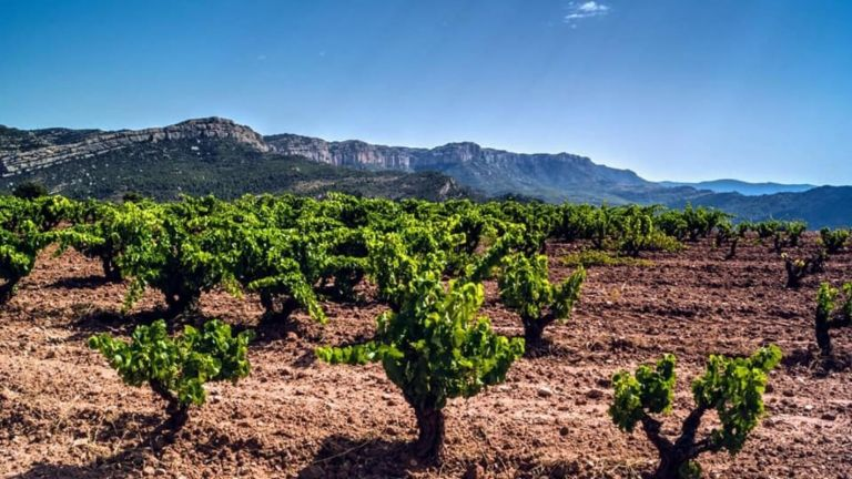 Priorat Wine and Tasting Tour