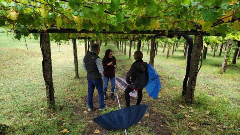 Self-driven Albarino Wine Tour of the Rias Baixas of Galicia, a Land of Seafood and Fine White Wines
