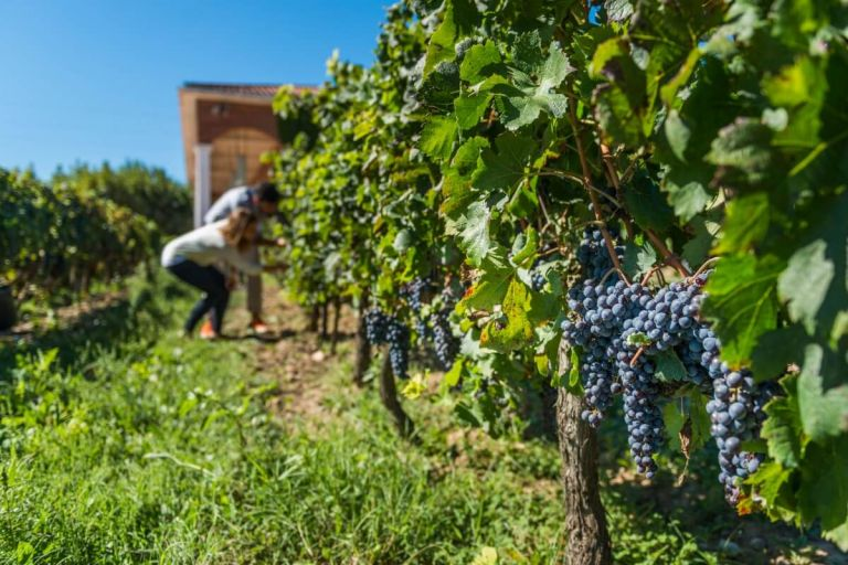 Private Wine Tour to Torres Winery where Fine Wine of the Penedes Region is Born and Raised