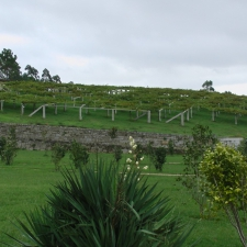 Pazo Baion Albarino Winery - Vines
