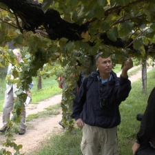 Pazo Baion Albarino Winery - Visiting the vineyard